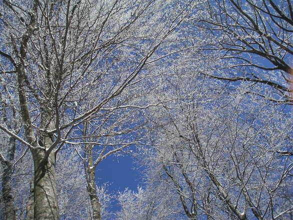 Utah winters